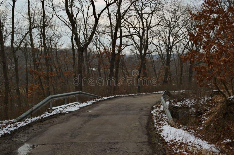 分支冷杉雪树型视图冬天 库存图片