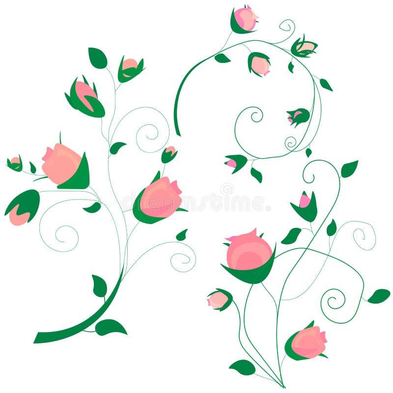 分支卷曲桃红色的汇集上升了,与蓝色花勿忘草,芽,绿色词根,在白色背景,digi的叶子的花束 库存例证