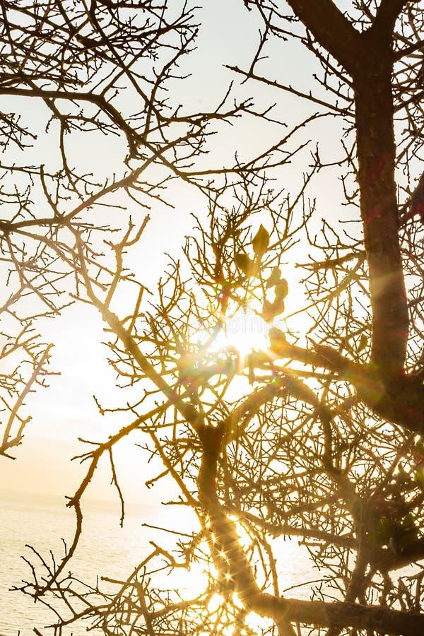 分支和枝杈的样式silouetted反对明亮的太阳在黎明 库存照片
