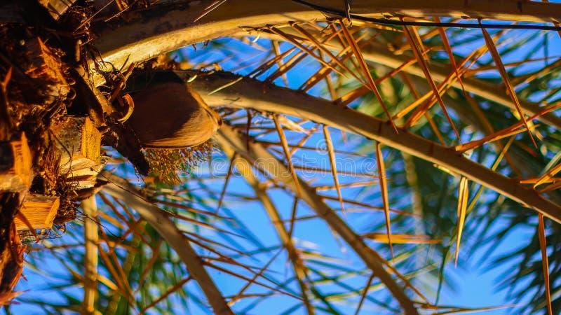 分支在海滩的棕榈树摄影的关闭  免版税图库摄影