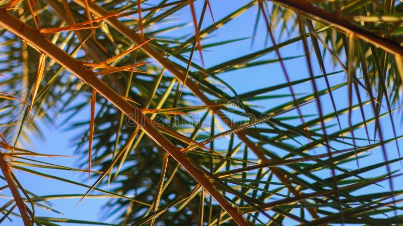 分支在海滩的棕榈树摄影的关闭  免版税库存图片