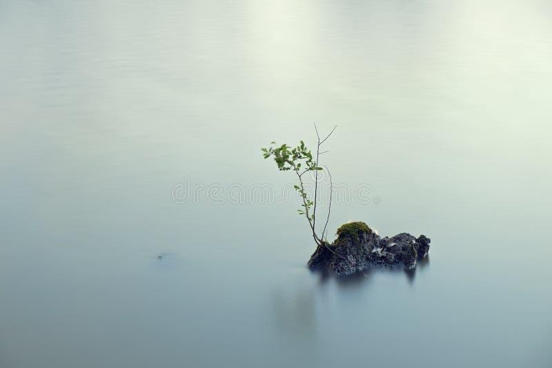 分支在湖 图库摄影