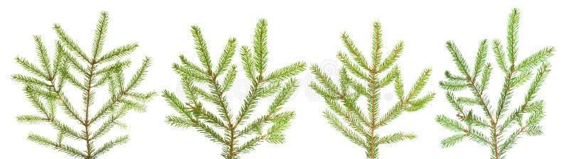 Download 分支杉树 库存照片. 图片 包括有 查出, brander, 文化, 关闭, 季节性, xmas, 圣诞节 - 22353018