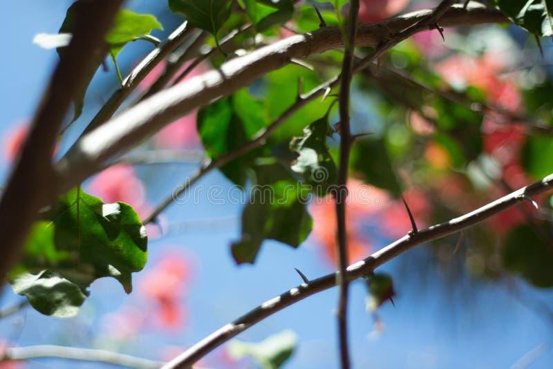 分支极端特写镜头射击与叶子的 库存照片