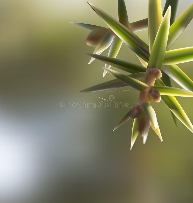 分支枝杈桧属oxycedrus人工喂养与针 向量例证
