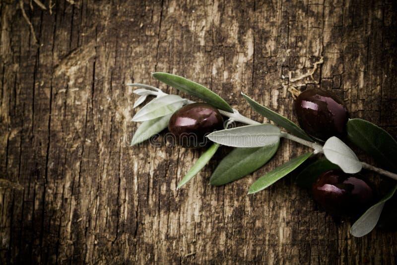 分支用新鲜的黑橄榄 库存图片