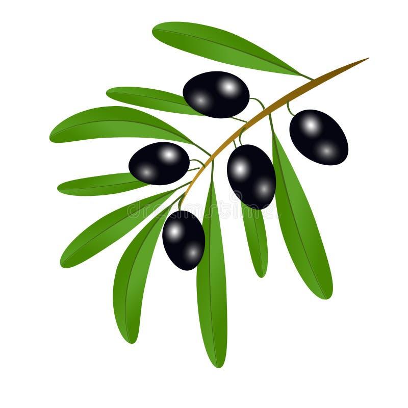 分支用黑橄榄和叶子装饰ol标签  皇族释放例证