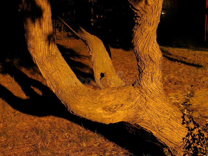 分支的结构树 免版税库存照片