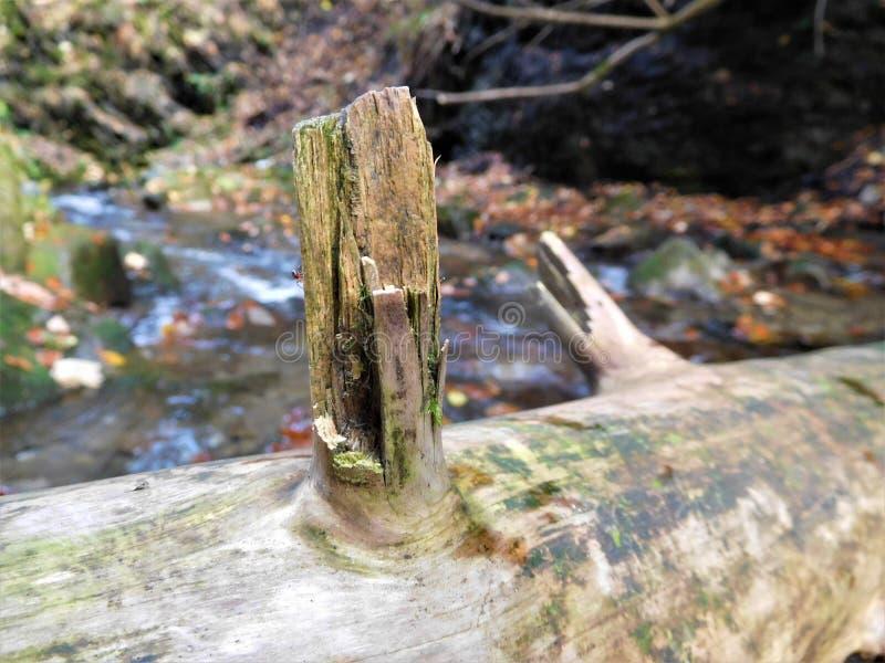 分支裁减片断在树的在自然,在河附近 免版税库存照片