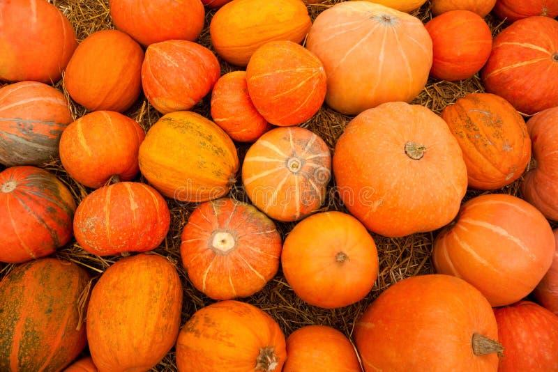 分散的草批次橙色南瓜 库存照片