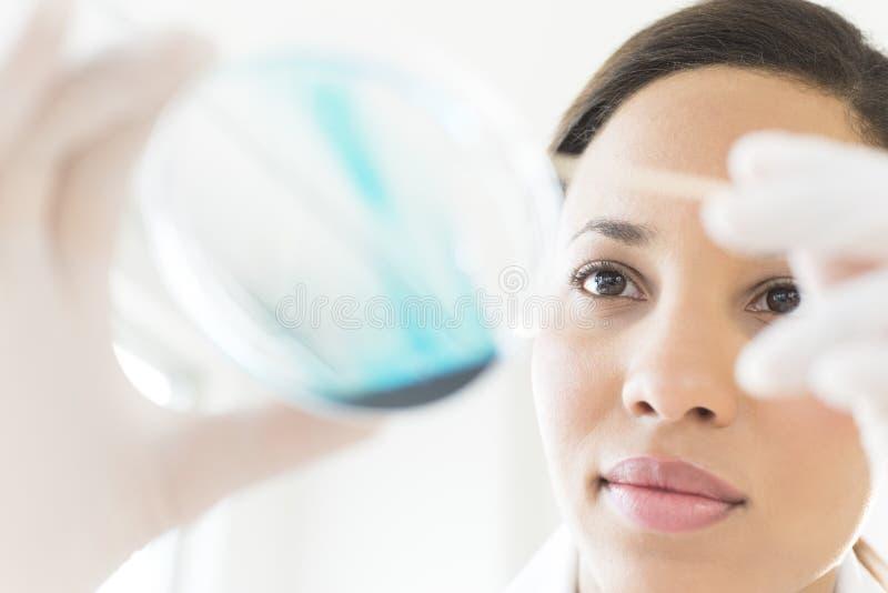 分析在培养皿的女性科学家解答在实验室 免版税库存图片