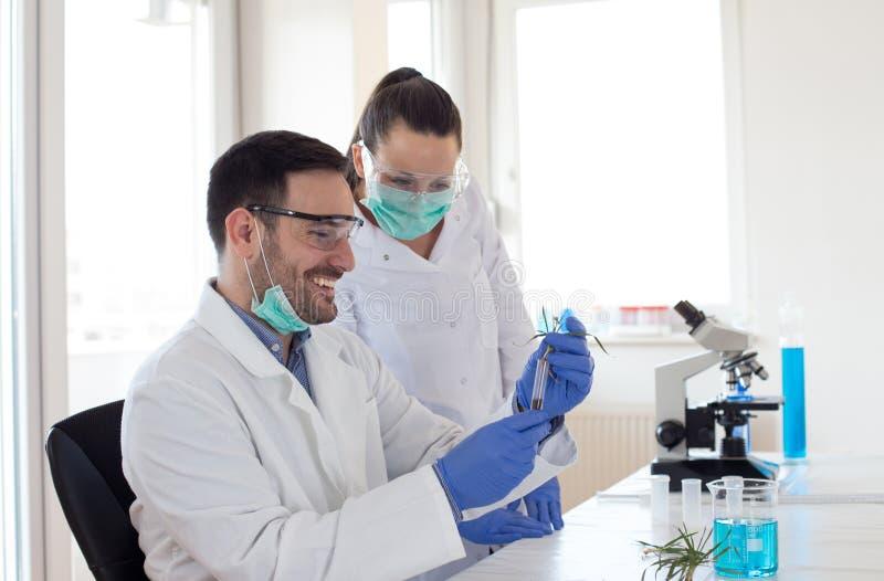 分析新芽成长的生物学家 库存图片