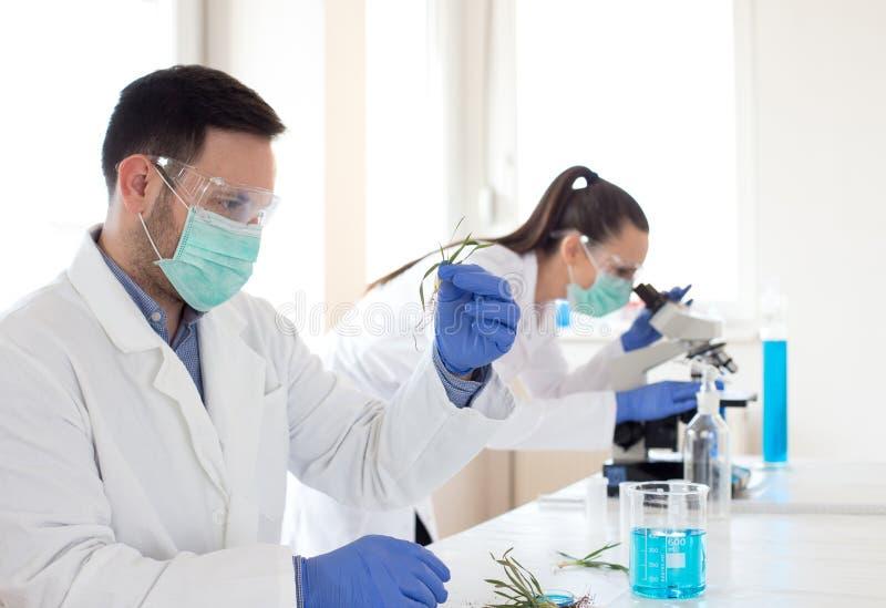 分析新芽成长的生物学家 库存照片
