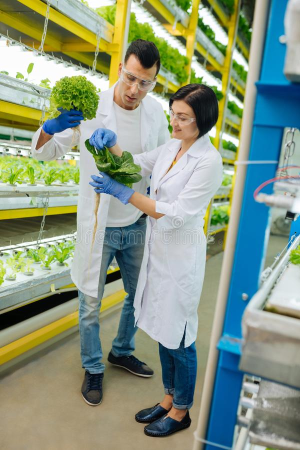 分析的专业农业学家绿色植物自温室 库存图片