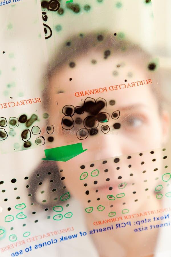 分析表达式基因 库存图片