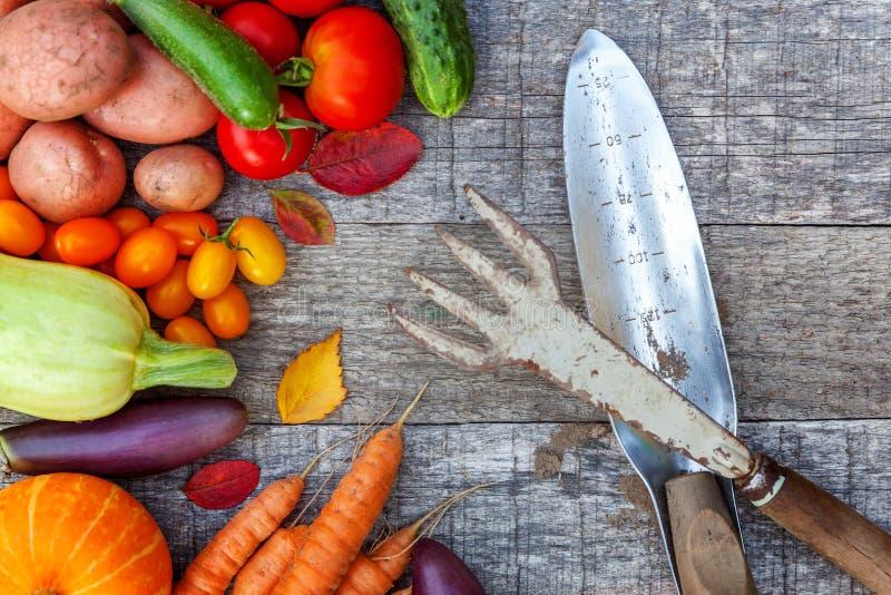 分类不同的新鲜的有机蔬菜和园艺工具在乡村模式的木背景 地方庭院生产干净 免版税库存照片