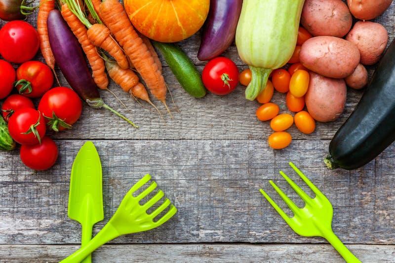 分类不同的新鲜的有机蔬菜和园艺工具在乡村模式的木背景 地方庭院生产干净 免版税库存图片