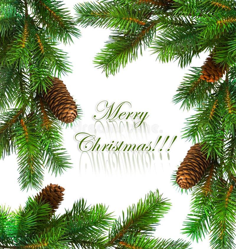 分行圣诞树 免版税库存照片