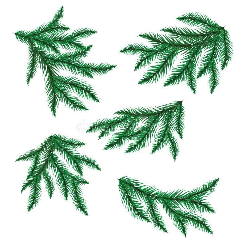 分行查出的杉木白色 向量例证