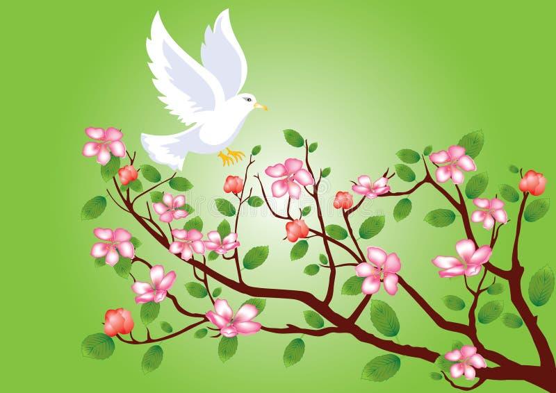 分行樱桃开花的飞行鸽子 向量例证