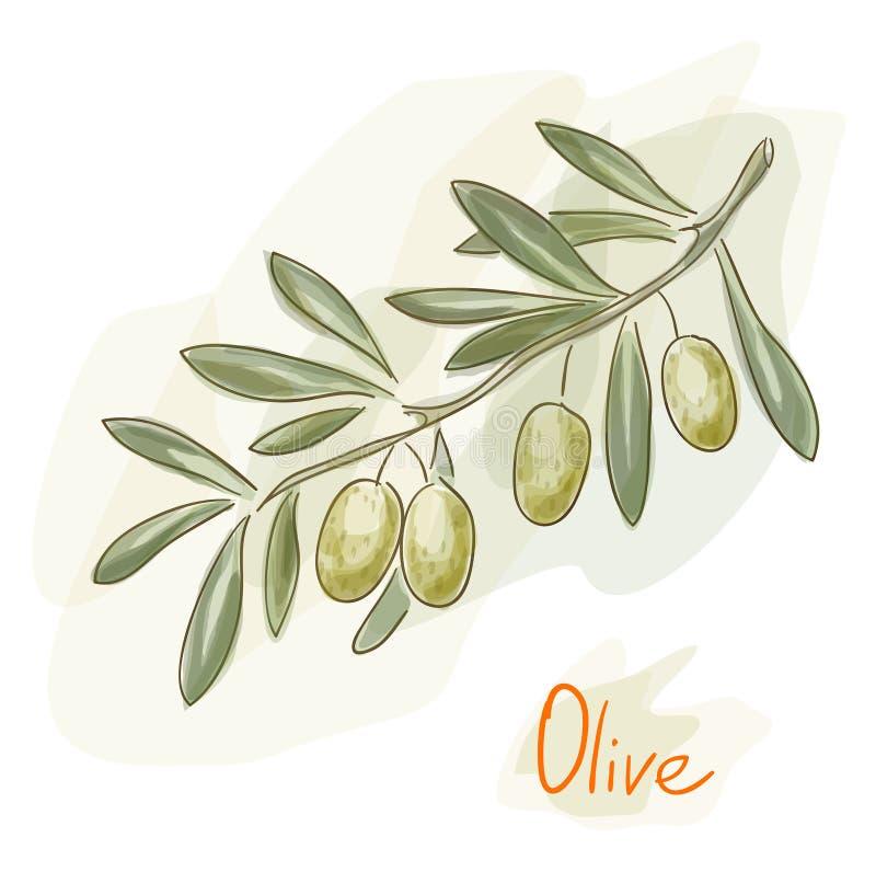 分行橄榄色样式水彩 库存例证