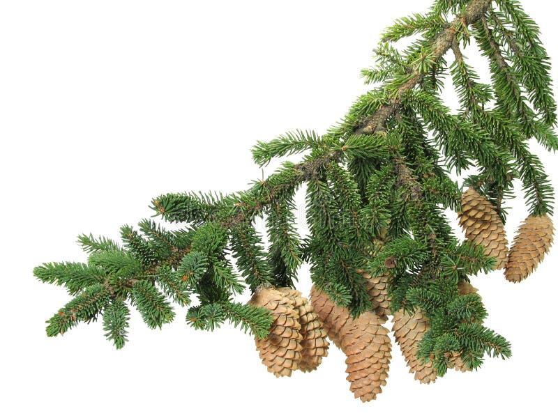 分行毛皮结构树 库存照片