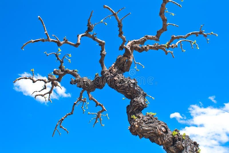 分行烘干结构树 免版税库存图片