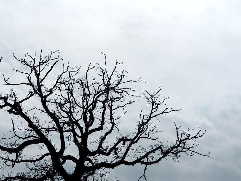分行现出了轮廓结构树 免版税库存照片
