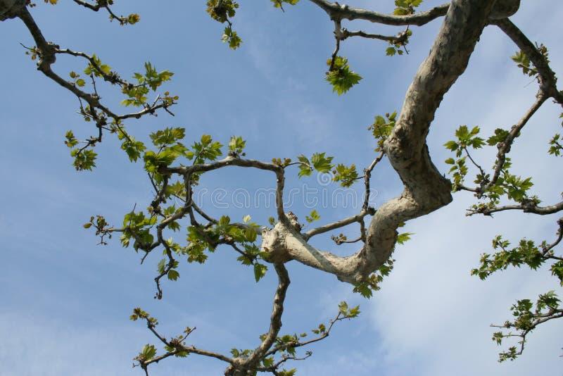 分行结构树 库存图片
