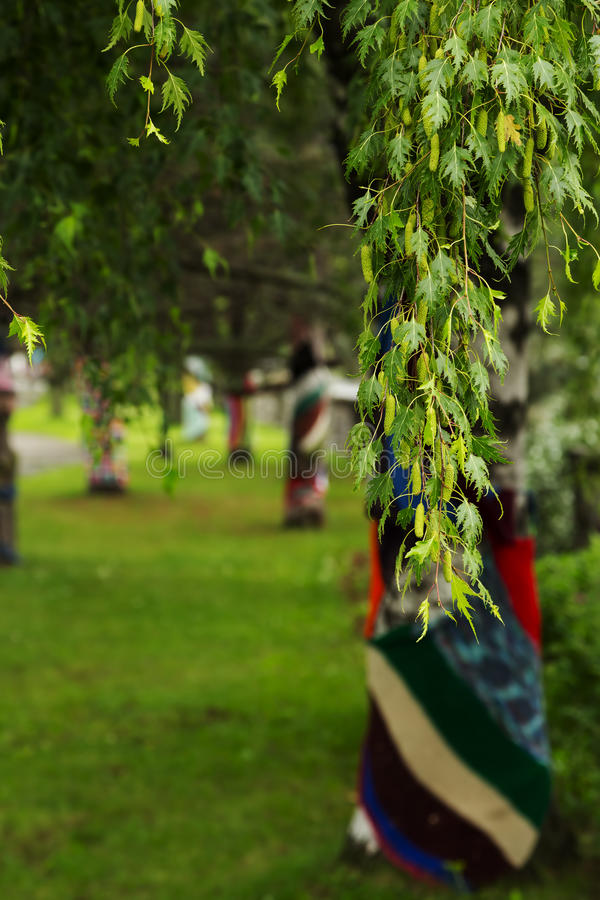 分行绿色结构树 库存图片
