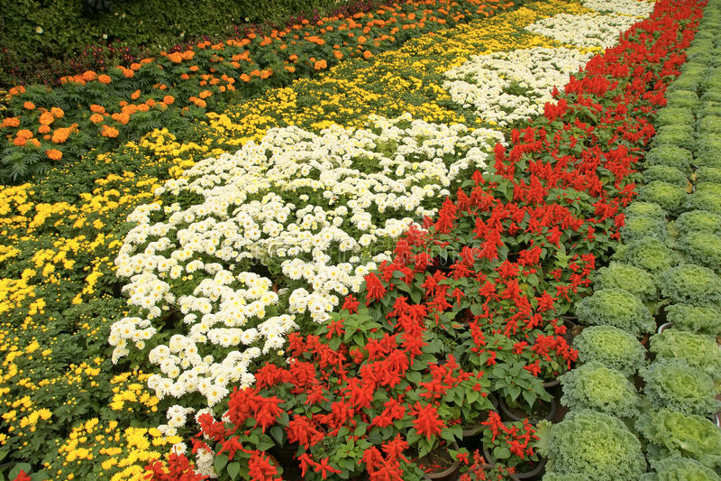 分配为花坛的区域 库存照片