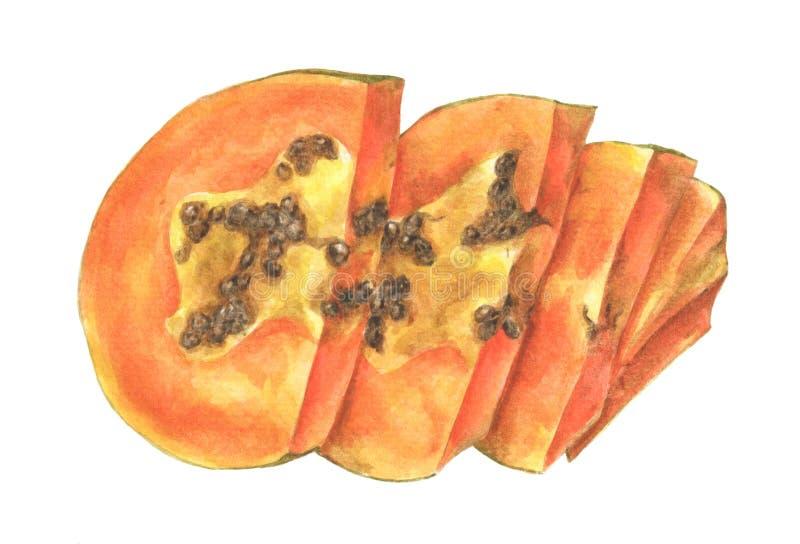 切与在白色背景隔绝的种子的成熟番木瓜 皇族释放例证