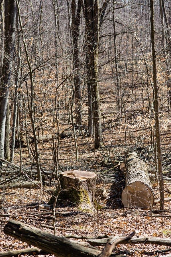 切口树在森林里 库存照片
