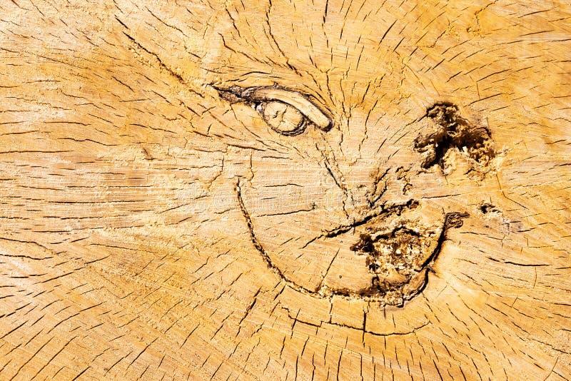 切开日志 破裂的表面 树桩纹理 ?? 库存照片