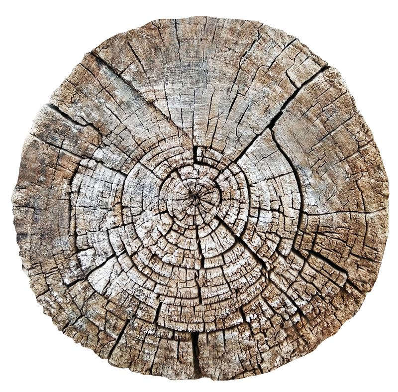 切开木树干或树桩 免版税库存图片
