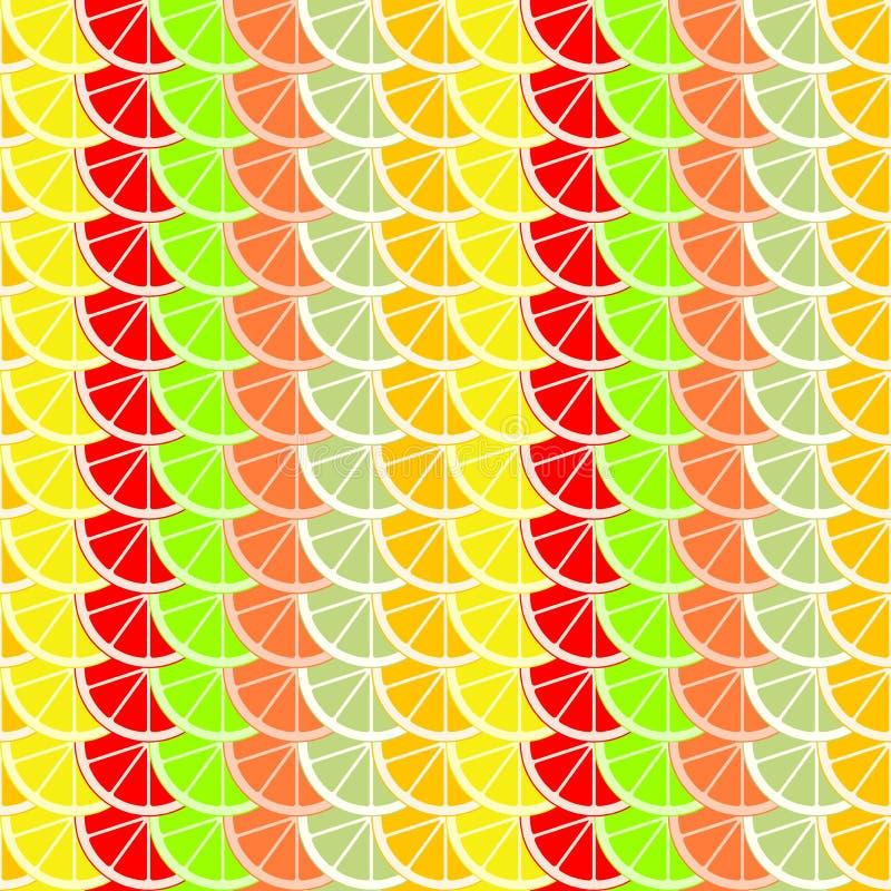 切片五颜六色的背景和切片桔子、石灰、葡萄柚、蜜桔、柠檬和柚柑橘水果  背景从 向量例证