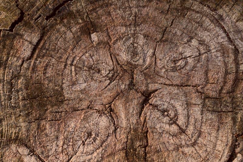 切片的背景纹理老棕色木头 免版税库存照片