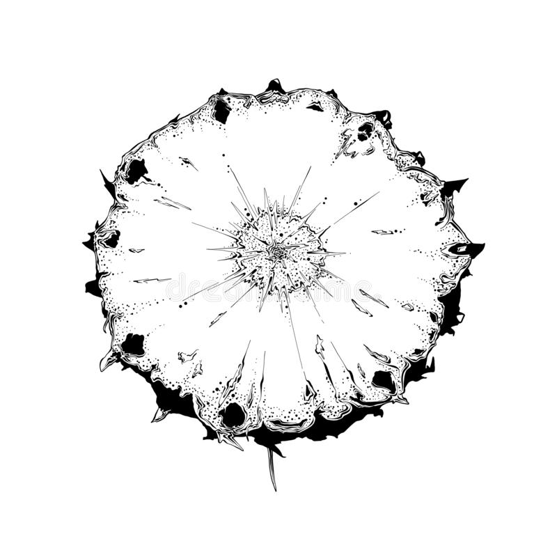切片菠萝手拉的剪影在黑色的 背景查出的白色 画为海报,装饰和 库存例证