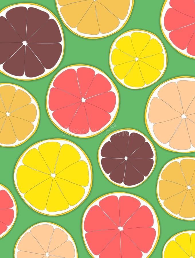 切的柑橘水果、桔子、石灰、柠檬和葡萄柚 向量例证