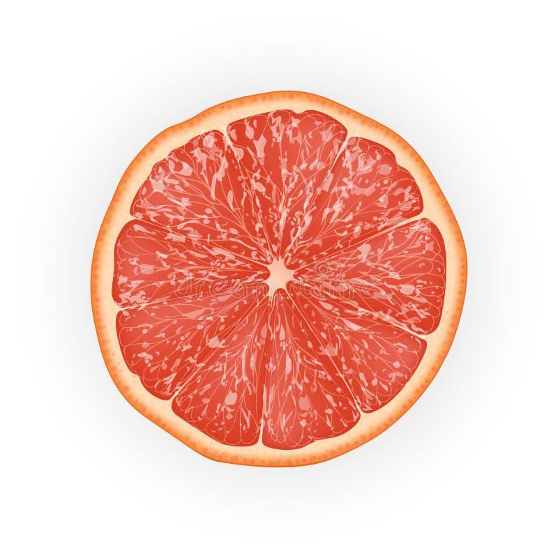 切的葡萄柚的现实3d传染媒介例证 五颜六色 皇族释放例证