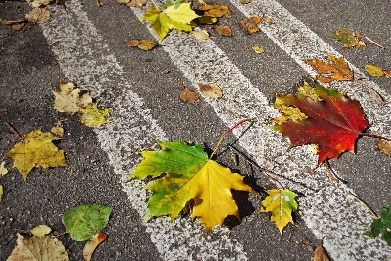 划分为的叶子 免版税库存照片