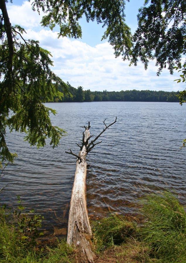 划分为的结构树在Wilderness湖 图库摄影