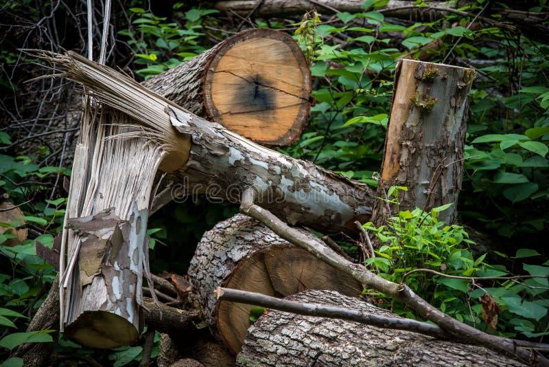 划分为的结构树在森林里 库存图片