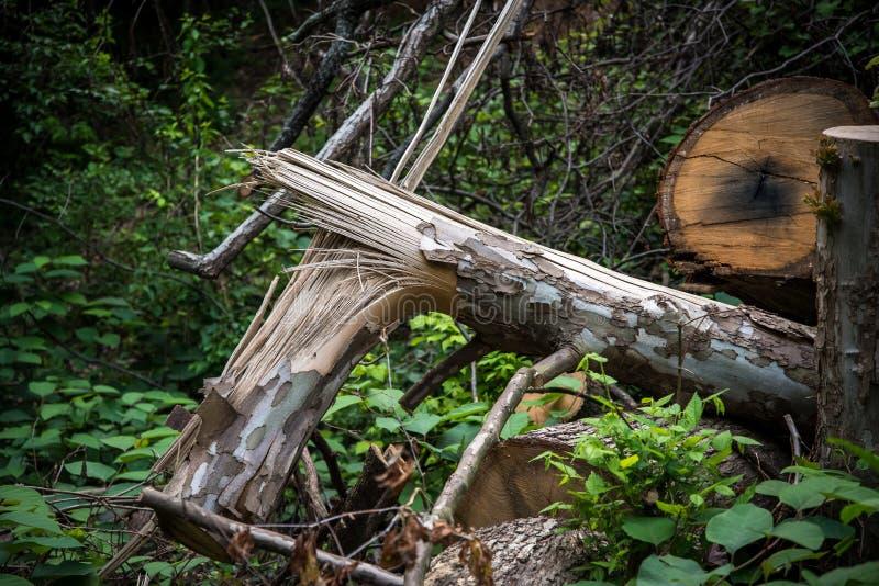划分为的结构树在森林里 免版税库存照片