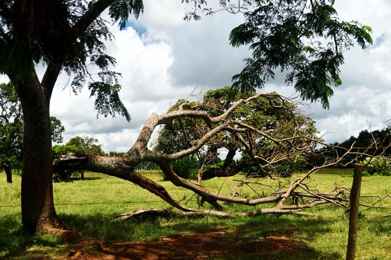 划分为的结构树 免版税库存照片