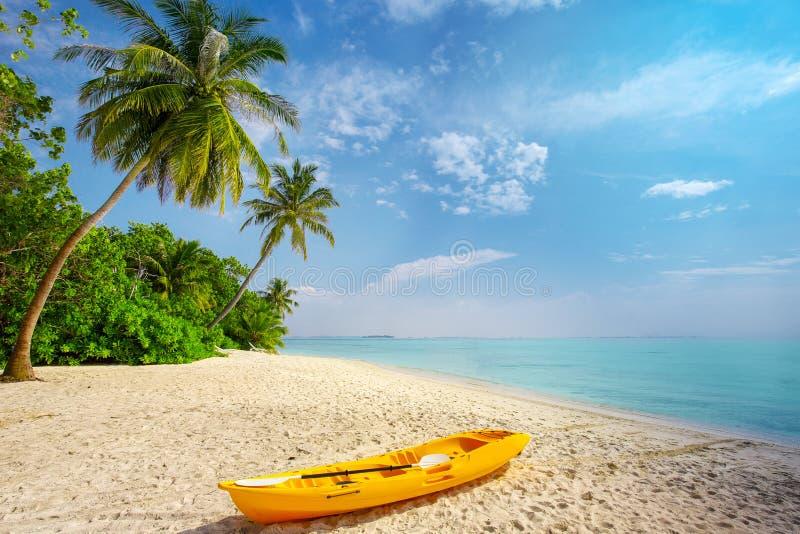 划皮船在与棕榈树的晴朗的热带海滩在马尔代夫 库存图片