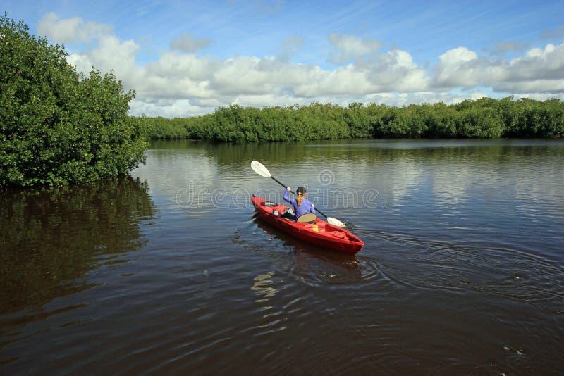 划皮船在大沼泽地国家公园,佛罗里达的妇女 库存照片