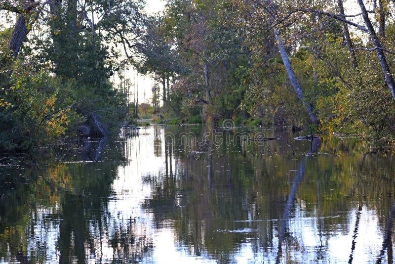 划船通过沼泽 库存照片