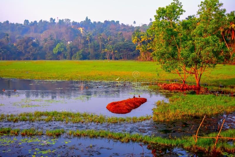 创造不可思议的背景的难以置信和五颜六色的观点的有水和树的湿软的土地和鸟 免版税库存照片