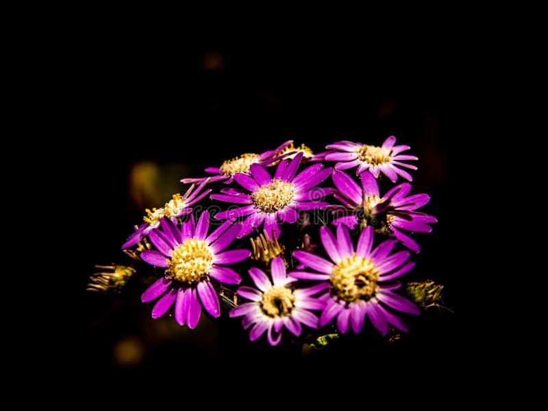 创造性的关闭紫色花 库存照片